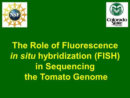 The Role of Fluorescence in situ hybridization (FISH) in Sequencing the Tomato Genome.