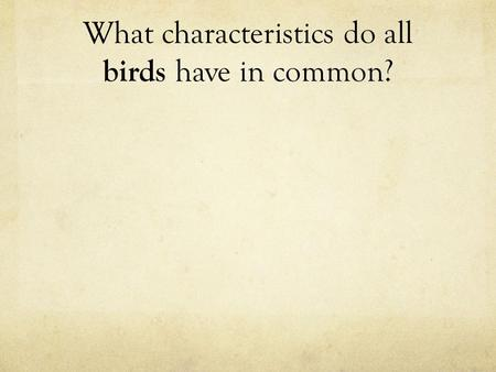 What characteristics do all birds have in common?