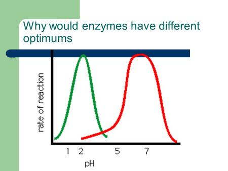 Why would enzymes have different optimums