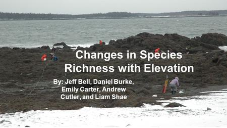 Changes in Species Richness with Elevation By: Jeff Bell, Daniel Burke, Emily Carter, Andrew Cutler, and Liam Shae.