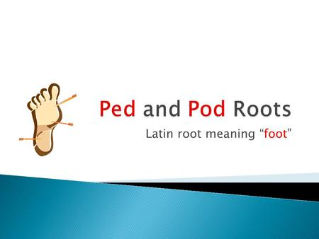 "Latin root meaning ""foot"""