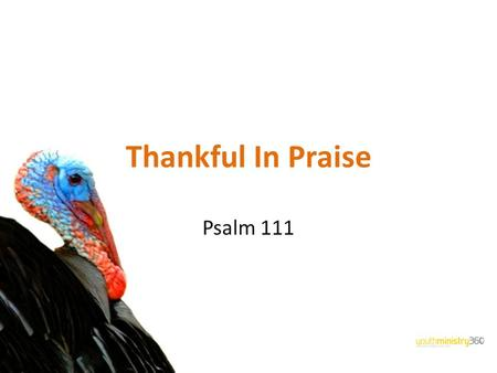 Thankful In Praise Psalm 111. How Well Do You Know Your Turkey?