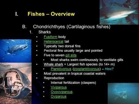 I. I.Fishes – Overview B. B.Chondrichthyes (Cartilaginous fishes) 1. 1.Sharks Fusiform body Heterocercal tail Typically two dorsal fins Pectoral fins usually.
