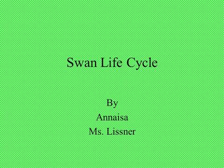 Swan Life Cycle By Annaisa Ms. Lissner.