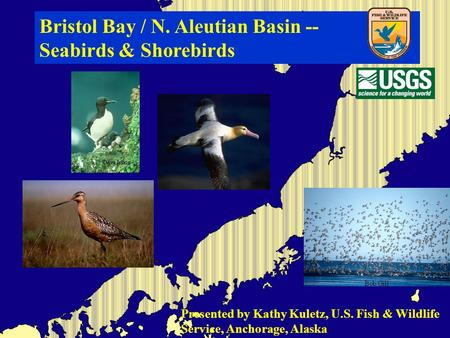 Bristol Bay / N. Aleutian Basin -- Seabirds & Shorebirds Presented by Kathy Kuletz, U.S. Fish & Wildlife Service, Anchorage, Alaska.