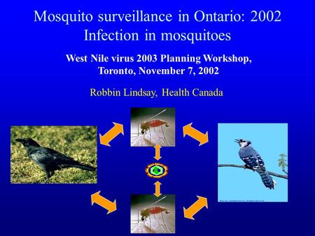 Mosquito surveillance in Ontario: 2002 Infection in mosquitoes West Nile virus 2003 Planning Workshop, Toronto, November 7, 2002 Robbin Lindsay, Health.