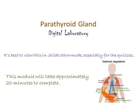 Parathyroid Gland Digital Laboratory It's best to view this in Slide Show mode, especially for the quizzes. This module will take approximately 20 minutes.