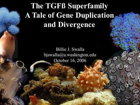 The TGFß Superfamily A Tale of Gene Duplication and Divergence Billie J. Swalla October 16, 2006.
