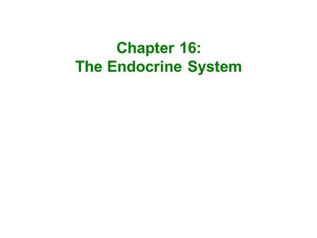 Chapter 16: The Endocrine System.