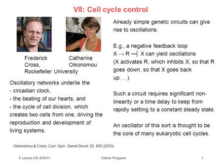 8. Lecture WS 2010/11Cellular Programs1 Already simple genetic circuits can give rise to oscillations. E.g., a negative feedback loop X  R ─┤ X can yield.