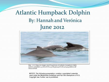Atlantic Humpback Dolphin By: Hannah and Verónica NOTICE: The following presentation contains copyrighted materials used under the Multimedia Guidelines.