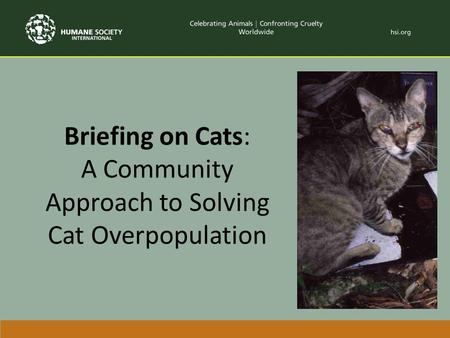 Briefing on Cats: A Community Approach to Solving Cat Overpopulation.