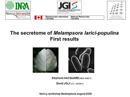 Stéphane HACQUARD (INRA NANCY) The secretome of Melampsora larici-populina First results Nancy, workshop Melampsora, august 2008 David JOLY (CFL QUEBEC)