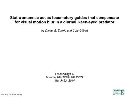 Static antennae act as locomotory guides that compensate for visual motion blur in a diurnal, keen-eyed predator by Daniel B. Zurek, and Cole Gilbert Proceedings.