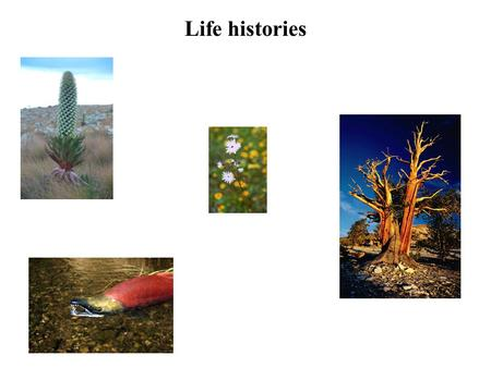 Life histories. What is a life history? Life History – An individual's pattern of allocation, throughout life, of time and energy to various fundamental.