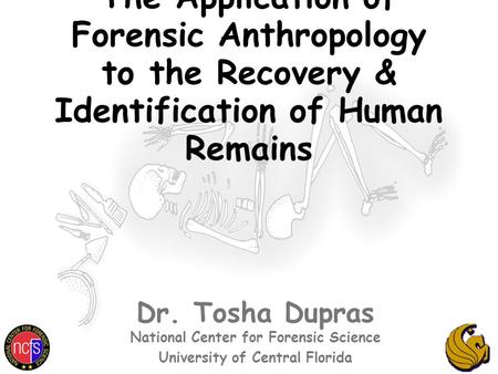 The Application of Forensic Anthropology to the Recovery & Identification of Human Remains Dr. Tosha Dupras National Center for Forensic Science University.
