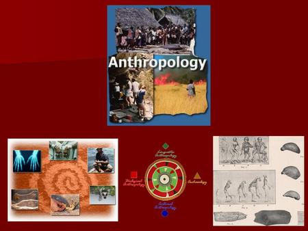 What is Anthropology? Anthropology is the broad study of humankind around the world and throughout time. It is concerned with both the biological and.