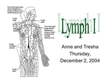 Anne and Tresha Thursday, December 2, 2004. Central = Primary lymphoid tissue Site of maturation of the cells of the immune system Thymus –encapsulated.
