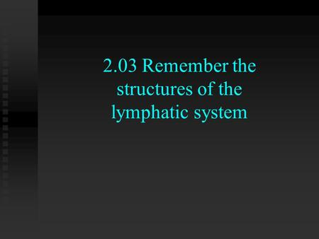 2.03 Remember the structures of the lymphatic system.