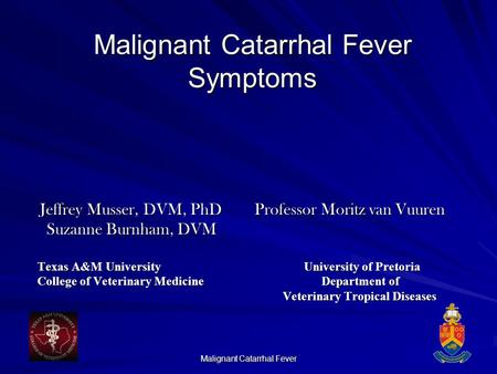 Malignant Catarrhal Fever Symptoms