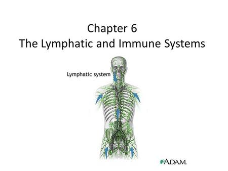 Chapter 6 The Lymphatic and Immune Systems. The Lymphatic System Works closely with the immune system to protect and maintain the health of the body Functions.