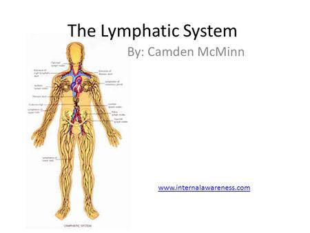 The Lymphatic System By: Camden McMinn www.internalawareness.com.