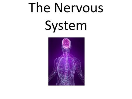 The Nervous System. Neurons A neuron consists of two major parts: Cell Body The central cell body contains the neuron's nucleus, associated cytoplasm,