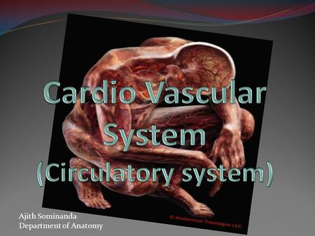 Ajith Sominanda Department of Anatomy. Lecture outline Why a circulatory system ? Arrangement of the CVS Vascular tree-Gross Anatomy CVS histology.