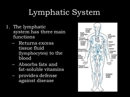 Lymphatic System ) 1.The lymphatic system has three main functions –Returns excess tissue fluid ( lymphocytes) to the blood –Absorbs fats and fat-soluble.