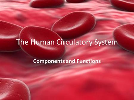 The Human Circulatory System Components and Functions.