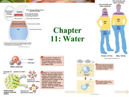 © 2010 Pearson Education, Inc. Chapter 11: Water.