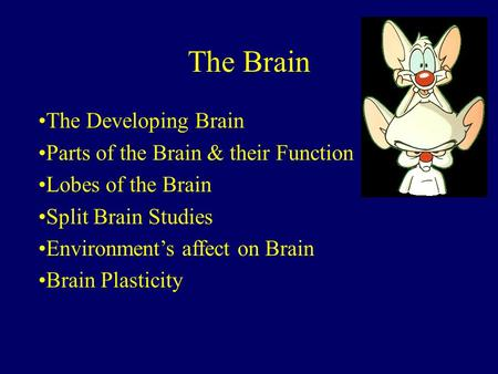 The Brain The Developing Brain Parts of the Brain & their Function Lobes of the Brain Split Brain Studies Environment's affect on Brain Brain Plasticity.
