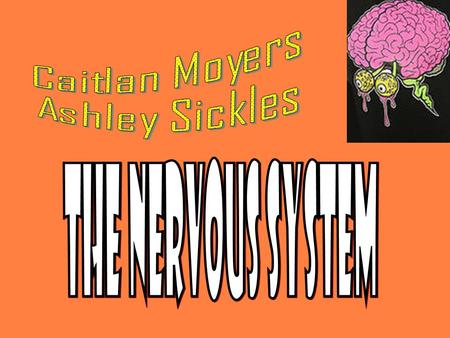 The nervous system is Important because… Coordinates the parts of the body and the organs the control body functions The most important reason…