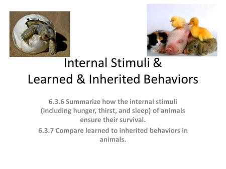 Internal Stimuli & Learned & Inherited Behaviors