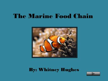 The Marine Food Chain By: Whitney Hughes.