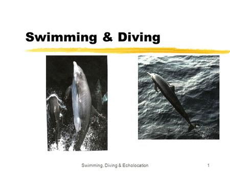 Swimming, Diving & Echolocation
