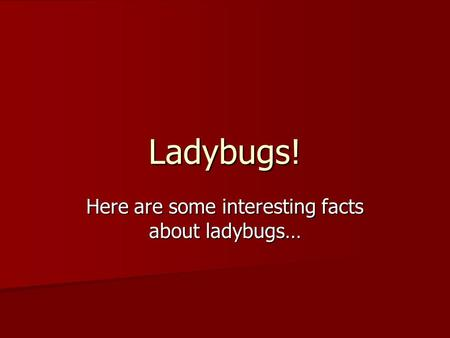 Ladybugs! Here are some interesting facts about ladybugs…
