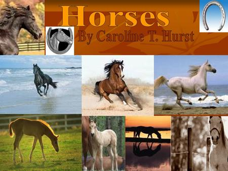 Table Of Contents  Competitionpage 3  What's the difference?page 4  Ill-tempered Horsespage 5  Where do horses still roam free?page 6  Picking the.
