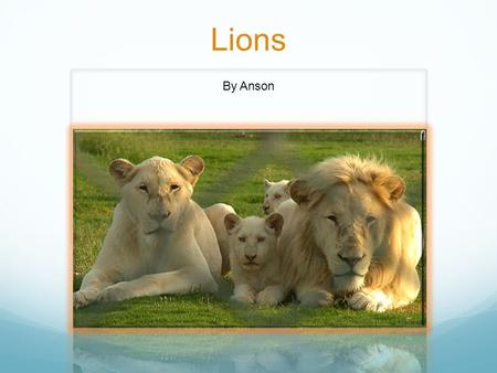 Lions By Anson. The Lion's Habitat Lions used to roam throughout southern Eurasia, Germany, Italy, Northern Asia, and even North America! But now, lions.