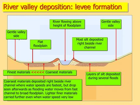 River valley deposition: levee formation Gentle valley side River flowing above height of floodplain Flat floodplain Gentle valley side Layers of silt.