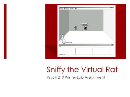 Sniffy the Virtual Rat Psych 210 Winter Lab Assignment.