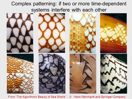"Complex patterning: if two or more time-dependent systems interfere with each other From ""The Algorithmic Beauty of Sea Shells"" © Hans Meinhardt and Springer-Company."