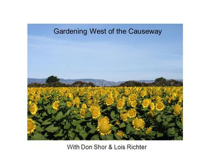 With Don Shor & Lois Richter Gardening West of the Causeway.