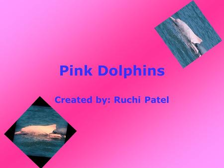 Pink Dolphins Created by: Ruchi Patel. Why are the Pink Dolphins pink? When they grow and colour changes.