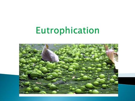  Eutrophication: pollution caused by the addition of nutrients; mainly nitrates, phosphates and sulfates.