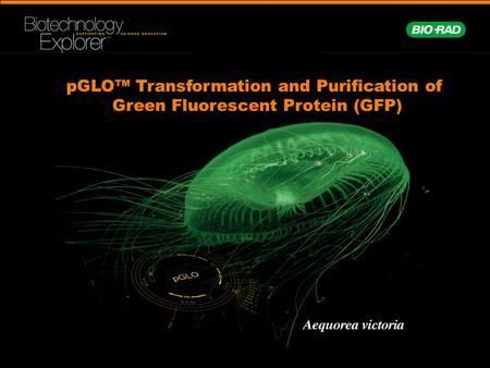 pGLO™ Transformation and Purification of