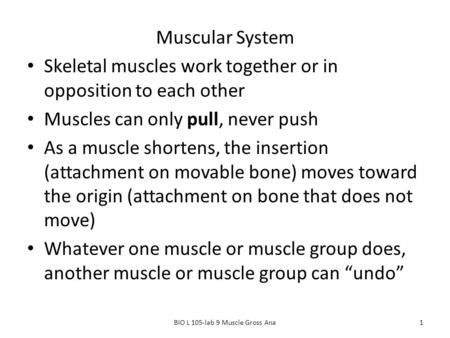Muscular System Skeletal muscles work together or in opposition to each other Muscles can only pull, never push As a muscle shortens, the insertion (attachment.