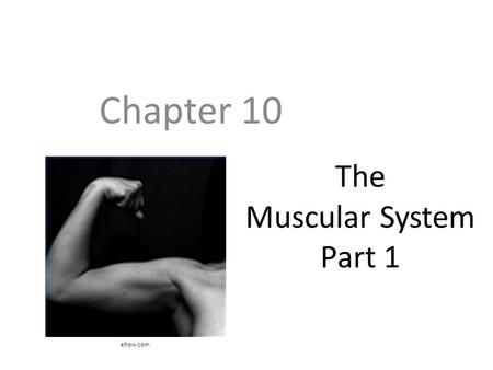 The Muscular System Part 1 Chapter 10 ehow.com. Objectives Know the various functions of muscle Know the structure of muscle and the various shapes muscles.