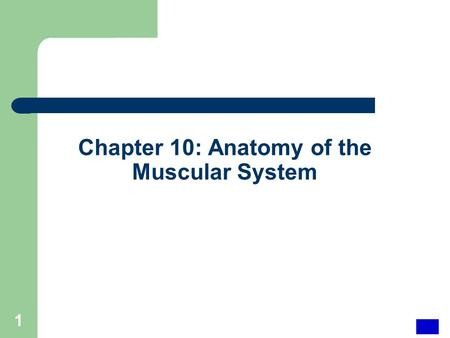 Chapter 10: Anatomy of the Muscular System