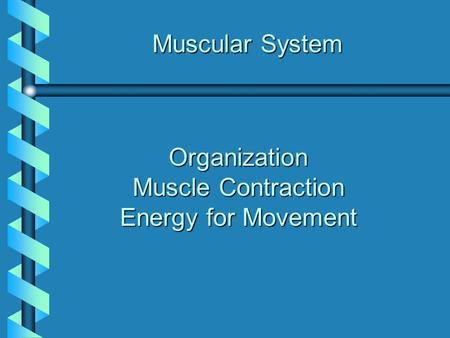 Muscle Contraction Energy for Movement